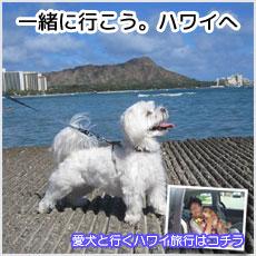愛犬とハワイへ